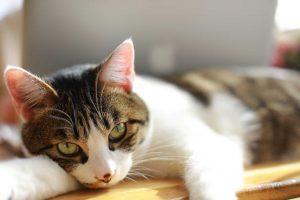 gato kawaii