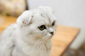 imagen gatito kawaii