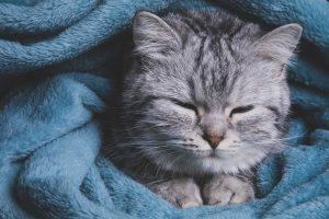 imagen gato cute kawaii